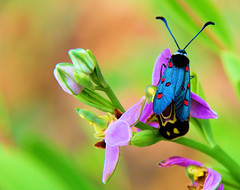 Papillon bleu (GerardMarsol) Tags: papillon orchidée fleur nature couleurs