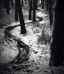 image (adam150678) Tags: path snow delamere monochrome forest