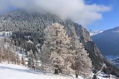 la Crevasse (bulbocode909) Tags: valais suisse coldesplanches montchemin montagnes nature paysages arbres mélèzes forêts lacrevasse neige givre automne nuages bleu stratus