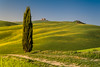 A9906440_s (AndiP66) Tags: zypressen cypresses cipressi sanquiricodorcia sanquirico sonnenuntergang sunset nebel dunst fog mist sonne sun evening abend april spring 2017 sony alpha sonyalpha 99markii 99ii 99m2 a99ii ilca99m2 slta99ii tamron tamronspaf70200mmf28dildif tamron70200mm 70200mm f28 amount andreaspeters