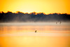 Gold Digger (gseloff) Tags: piedbilledgrebe bird duck sunrise water mist nature wildlife animal mudlake armandbayou pasadena texas kayakphotography gseloff