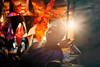 Marché de Noël de Pondichéry (Nithi clicks) Tags: chrstmas color light sun architecture building buildings christmas decorations culture history lights pedestrians road town shop shops store tortola tourism travel tree trees tropical vertical nithiclicks pondicherry தெருவோரகடைகள் கிருஸ்துமஸ் இயேசு மாதா
