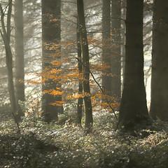 Standout (m00chas) Tags: tree mist landscape