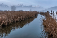 *Winter am Hopfensee* (Albert Wirtz @ Landscape and Nature Photography) Tags: hopfensee bayern bavaria deutschland germany lake hopfenamsee landscape paesaggi paysages schilf mountains alps alpen voralpen reflections spiegelung nebel fog mist brume bruma brouillard winter nebbia niebla water hopfenseeablauf snow schnee milderwinter wintermorgen wintermorning calm windstill natur nature natura biotop angeln anglers allemagne vilser walking hiking wandern trail rundweg winteramhopfensee laniebla
