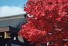 DSCF7888.jpg (YUSHENG HSU) Tags: 仙台市 宮城県 日本 jp
