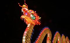 Chinesischer Drache (karinrogmann) Tags: chinesischerdrache chinesedragon dragocinese chinalightfestival kölnerzoo
