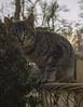 Gato en la basura (kalizsky) Tags: gato aranjuez basura parque papelera animals nature