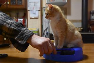 il gigante buono e la gattina