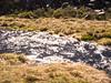 Desagüe laguna Azul (Mauro Pesce) Tags: water glow shining agua resplandor light luz morninglight lagunaazul villarricatraverse omd em5 nature naturaleza waterflow river rio araucania chile sunlight bright shiny beaming radiant