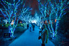 (nickmickolas) Tags: atlanta 2017 ga atlantabotanicalgardens robyn holidaylights