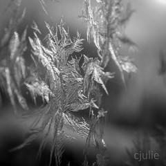 pluie de flocons (cjuliecmoi) Tags: givre glace hiver macro neige