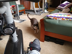 07Dec17 The Gym Advisor gets tough and actively gives me some training motivation. #latergram #catsofinstagram #homegymlife #2017pad #photoaday #picaday