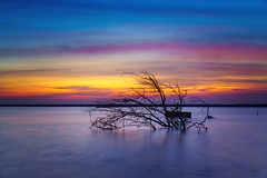 Tree of colors (TOYTOMORN) Tags: landscape สมทุรสาคร amateur a6500 alpha apsc apcs asian asia sky scene sunset sony skies selp18105g sony18105 sunrise sea sun darkclouds gold golden hour light landscapes lights longexposure epz18105mm exposure colour color cloud clouds colorful camera samutsakorn thailand thai seascape outdoor ilce6500 image pics photo photography photographer tree blue bluehour yellow eyes skyline sony18105mm 18mm long kit lenskit