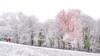 L'apprenti photographe. (vegard.magnus) Tags: gm1 micro four thirds hybrid belledonne grenoble gières enfant child children trees forest forêt cloudy white winter landscape paysage
