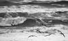 sea life (photoksenia) Tags: storm sea blackandwhite bw seagull blacksea
