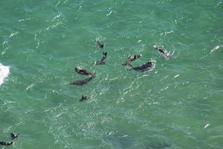 Playful Seals