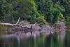 Lake Barrine (paulberridge) Tags: australia landscape water river nationalparks qldparks parksandwildlife canoncamera nature landscapephotography australianlandscape wettropics rainforest queensland lakebarrine craterlake craterlakesnationalpark wildlife birdphotography birdwatching athertontablelands