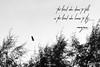 Bird In The Sky (noku.my) Tags: bird eagle sky scenery nature quote bukit keluang besut terengganu malaysia
