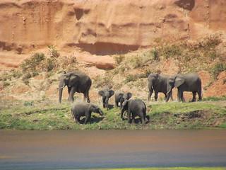 Zimbabwe Cape Buffalo Hunt 20
