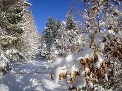 PC290047 (turbok) Tags: ennstal landschaft schnee schneeundeis stimmungen winter c kurt krimberger