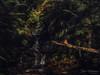 Leura Upper Cascades (Dave Whiteman - AU) Tags: bluemountains waterfall leurauppercascades leura