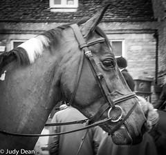 Horses of the Hunt 2 (judy dean) Tags: 2018 hunt meet newyear stowonthewold judydean horse head mane white