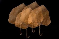 Leaf Leaf Leaf Leaf (suzanne~) Tags: leaf dry multipleexposure incamera macro macromondays doubleexposureincamera doubleexposure
