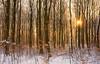 When Autumn Meets Winter (Tracey Whitefoot) Tags: tracey whitefoot 2017 autumn winter snow cold sunrise morning nomanshill woods forest sherwood woodland sunburst notts nottinghamshire