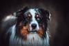 Dex (der_peste) Tags: dog aussie australianshepherd dogface portrait dogportrait shepherd vignette blur bokeh dof animal pet eye blueeye sonya7 walimexpro1352 samyang1352