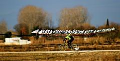Gaviotas al sol en el Ebro (portalealba on holidays) Tags: zaragoza zaragozaparque aragon españa spain gaviota portalealba canon eos1300d