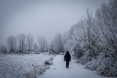 Negro sobre blanco (javipaper) Tags: snow winter invierno frío cold white black blanco negro