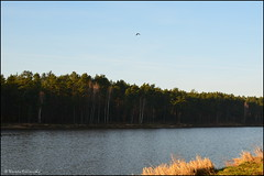 DSC_7024 (facebook.com/DorotaOstrowskaFoto) Tags: rejów skarżyskokamienna zalew zalewrejowski plaża drzewa woda świętokrzyskie poland spacer