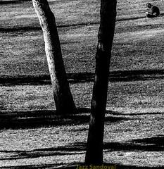 Sentado. 03. Valencia, noviembre 2017. (Jazz Sandoval) Tags: 2017 elfumador españa exterior enlacalle blancoynegro blanco bn bw boy botánica contraste calle curiosidad curiosity city ciudad digital day dìa fotografíadecalle fotodecalle fotografíacallejera fotosdecalle gente hombre human humanfamily humano white uno intriga jazzsandoval jardín luz light valencia silencio monocromática monócromo man negro nero black people paisaje parque personaje persona quieto robado retrato streetphotography streetphoto sombras sentado solo