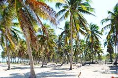 MACEIO 0084 (tinancv) Tags: maceio alagoas brach praia