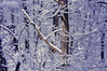 Deep Freeze (Hi-Fi Fotos) Tags: winter woods backyard snow ice cold frost frigid freeze trees branches forest nature season nikon d5000 hififotos hallewell