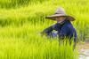 ChiangRai_2307 (JCS75) Tags: asia asie thailand thailande chiangrai canon