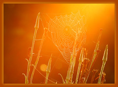 """Kissing the morning web :*: (Darrell Colby """" You Call The Shots """") Tags: morning web sunrise kiss kissing glow morningglow spiderweb darrellcolby"""