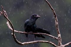 Ani in the Rain (donnatopham) Tags: ecuador
