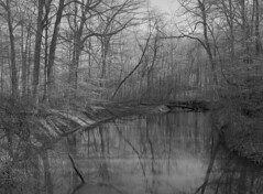 The Galien River (pabs35) Tags: film believeinfilm ilford fp4 fp4plus blackandwhite bw mediumformat 120 mamiya m645 1000s mamiyam6451000s galienriver warrenwoodsstatepark michigan river trees nature