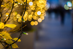 Lights and Leafes - Photo # 13 of a Christmas Series (*Capture the Moment*) Tags: 2017 bokeh christmasmarket dof fotowalk mog mogprimoplan1975neo meyeroptikgörlitzprimoplan1975neo munich münchen nachtaufnahmen nightshot sonya7m2 sonya7mii sonya7mark2 sonya7ii sonyilce7m2 weihnachtsmarkt bokehlicious