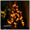 Day 346 - Heart Bokeh ❤️  My first attempt - probably need to experiment a bit more. #day346 #346/365 #365 (DenisePhoto1) Tags: photoadayproject heartbokeh heart bokeh project365 photoproject photochallenge photoaday december365 365december 365photoadayproject 365photoadaychallenge 365photoaday 365photoproject 365photochallenge 365project 365challenge 365photo 346365 day346 346 365