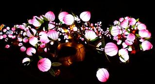 Les lumières féériques des lotus