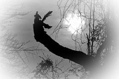 untitled (avflinsch) Tags: ifttt 500px mist landscape fog nature sun tree silhouette dawn backlit solitude sunbeam back lit