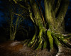 Darkness in the Woods (svensl) Tags: trust birch oak trees woodland dunkeld scotland schottland scottish kinclaven