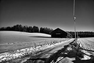 Winterlicher Weg monochrom