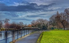 Seagulls in a row. 😁👍😁 (LeanneHall3 :-)) Tags: eastpark hull kingstonuponhull lake water seagulls birds fence bridge green grass trees branches sky skyscape clouds white blue landscape samsung galaxys7edge