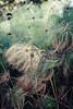 Museu de Arte da Pampulha (Johnny Photofucker) Tags: museudapampulha map bh belohorizonte minasgerais mg planta plant pianta paisagismo burlemarx lightroom jardinagem verde green pampulha 70200mm