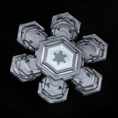 Snowflake-a-Day No. 27 (Don Komarechka) Tags: snowflake snow flake ice crystal nature fractal hexagon turtle physics thinfilminterference focusstacking winter frozen water mineral blackbackground isolated geometry geometric