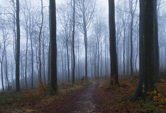 Happy new challenges! (siebensprung) Tags: ostwestfalen forest wald beech buche buchenwald nebel mist weather wetter nature natur woodland tree winter misty neblig