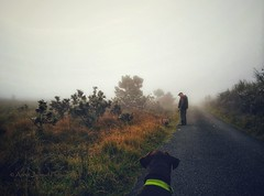 Walking in the fog (Vratsagirl) Tags: ©anniejapaudphotography cobwebs fog vratsagirl boxerdogs walker foggy road connemara naturephotography photography